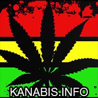 cannabis, news, newsy, marihuana, ganja, trawka, muzyka, rasta
