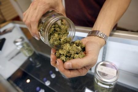 Degustowanie Marihuany to Też Zawód!, kanabis.info