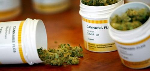 Marihuana, RSO, a Borelioza, kanabis.info