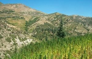 Maroko, w kraju haszyszu króluje podziemie i nielegalny handel narkotykami, kanabis.info
