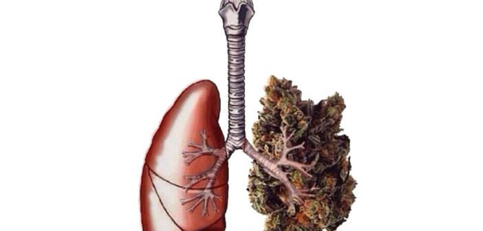 Pozytywny Wpływ Marihuany na Płuca, kanabis.info