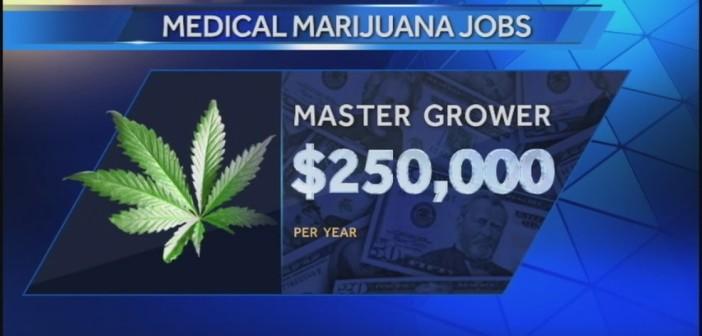Ile Można Zarobić Pracując w Przemyśle Marihuany?, kanabis.info