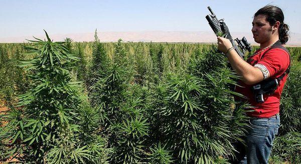 Bliski Wschód i Jego Konflikty: Tak Wygląda Biznes Marihuany w Środku Wojny, kanabis.info