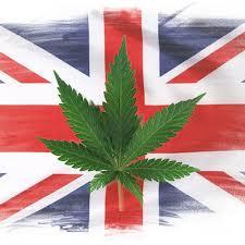USA: Koniec Federalnego Zakazu Stosowania Medycznej Marihuany, kanabis.info