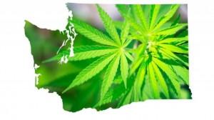 Waszyngton: dzienna sprzedaż marihuany na poziomie 2.3 mln $, kanabis.info