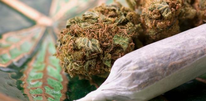 Czy Dzisiejsza Marihuana Jest Mocniejsza Niż 20 Lat Temu?, kanabis.info