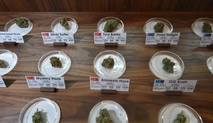 Sprzedaż Legalnej Marihuany w USA Może Sięgnąć 6,7 mld $ w 2016 Roku, kanabis.info