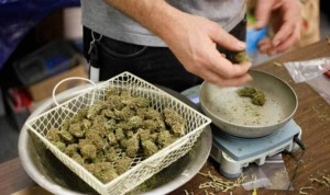 sprzedaz-marihuany-waszyngton-6236
