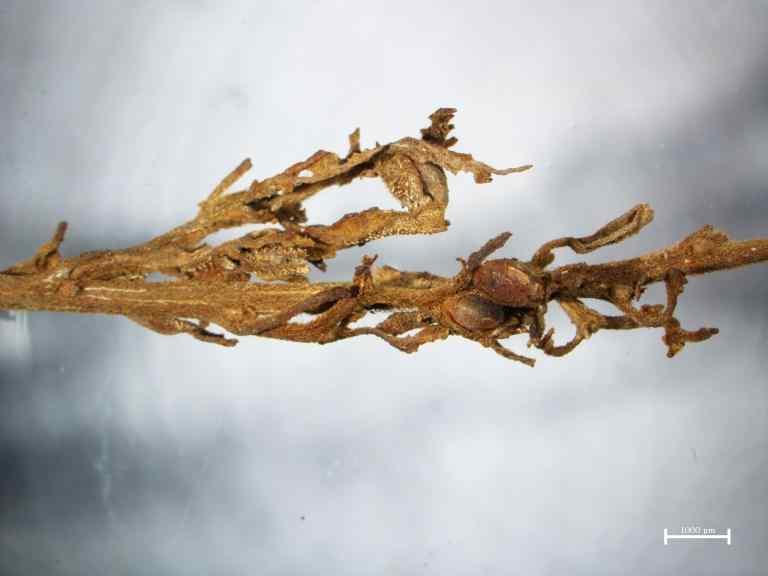 Archeolodzy Odkryli Konopie w Chińskim Grobie Mającym 2500 lat, kanabis.info