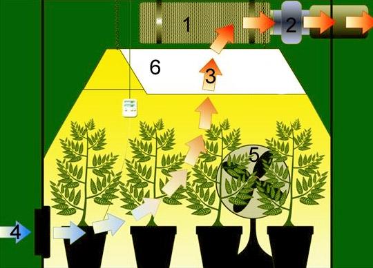 Przygotowanie growroomu do uprawy konopi, kanabis.info