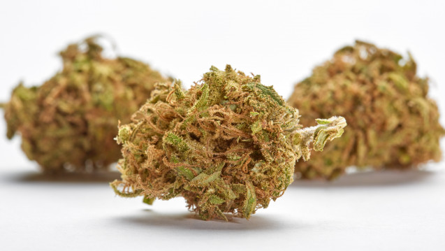 Niemcy: Apteki wydały w marcu ponad 500 razy pąki cannabisu, kanabis.info