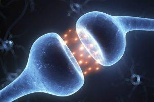 Odkrycie systemu endocannabinoidowego, kanabis.info