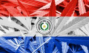 Paragwaj: prawo do legalizacji medycznej marihuany, kanabis.info