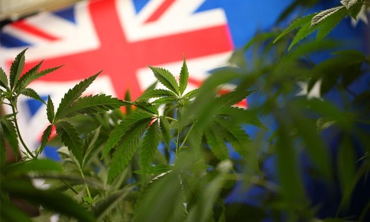 Australia: Canberra Legalizuje Marihuanę, kanabis.info