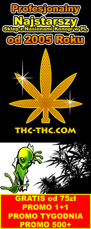 auto kwitnące nasiona marihuany, konopi indyjskich, sklep thc