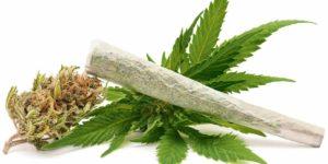 Francuski śledczy podejrzany o przemyt marihuany, kanabis.info