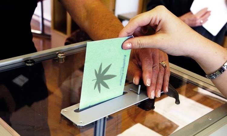 Referendum: Nowozelandczycy Głosują Przeciwko Legalizacji, kanabis.info
